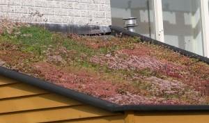 tetőkert építés